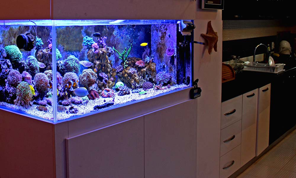 Aquarium Installation and Maintenance in Orlando